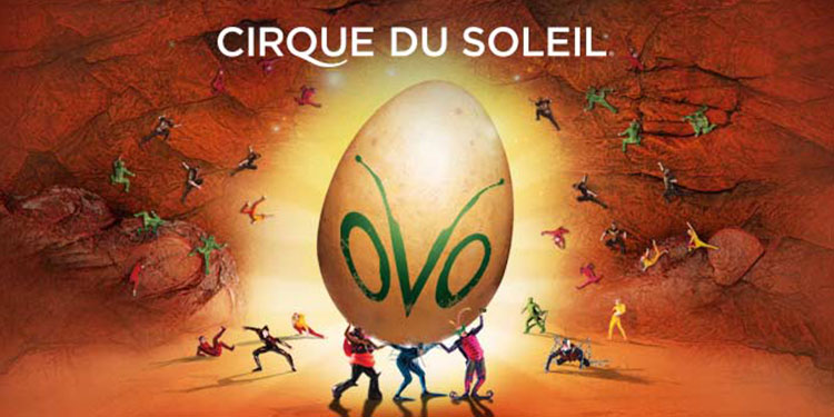 Cheap Cirque du Soleil - Ovo Tickets | Mark's Tickets